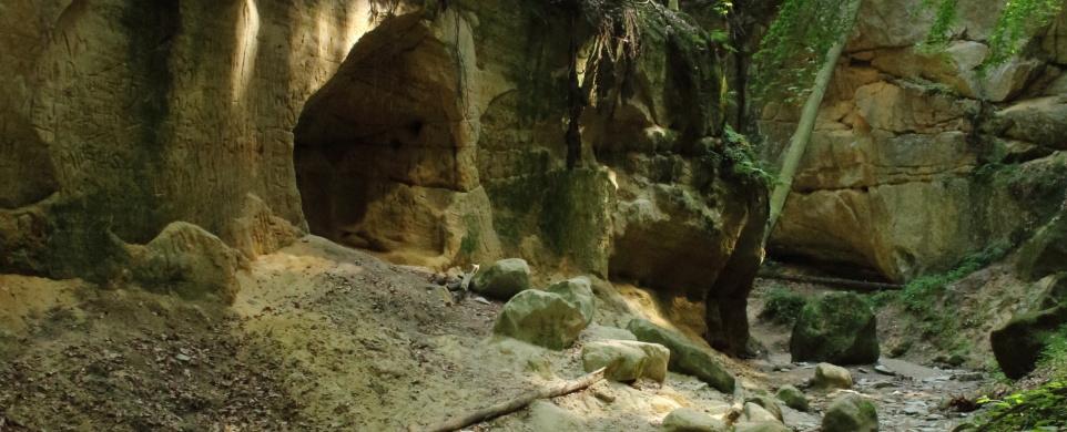 Pivnická rokle, kousek divočiny poblíž Toulovcových maštalí