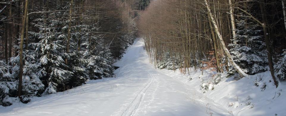 Na běžkách v Železných horách
