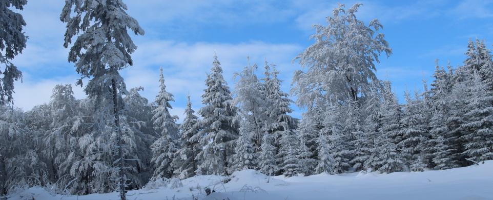 Na sněžnicích v Orlických horách