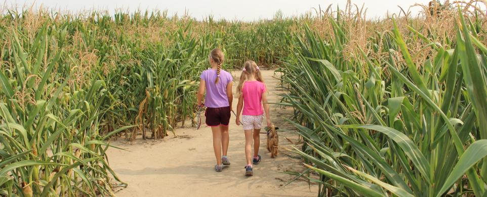 Kukuřičné bludiště v Pardubicích