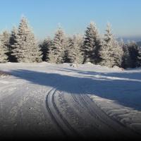 Běžky, lyže